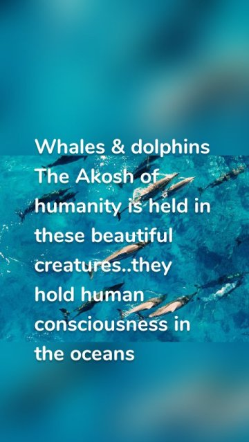 Whales & dolphins The Akosh of humanity is held in these beautiful creatures..they hold human consciousness in the oceans