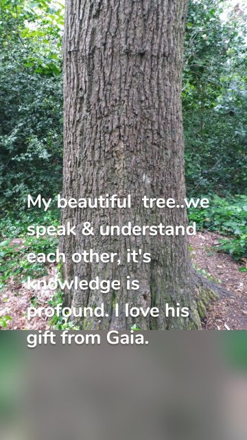 My beautiful tree..we speak & understand each other, it's knowledge is profound. I love his gift from Gaia.